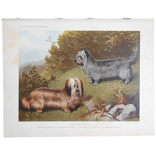 "Antique Dog Lithograph ""Skye Terriers"""