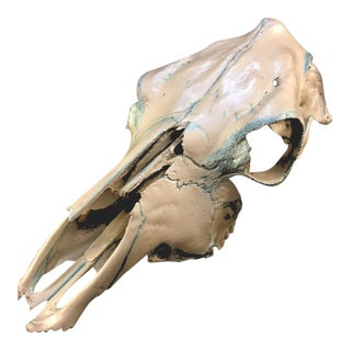 Hand Painted Cow Skull Decor