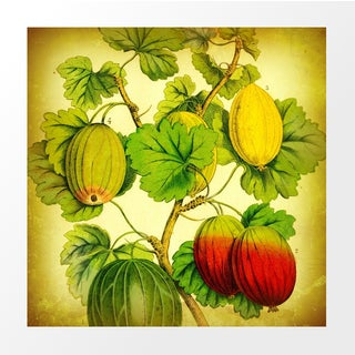 Vintage Gooseberries Archival Print