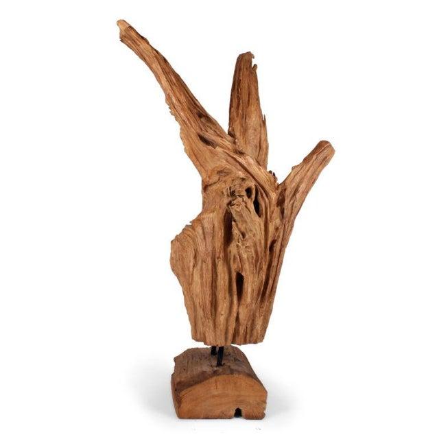 Image of Wild Asian Teak Tree Root Sculpture