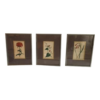 Antique Framed Botanical Engravings- Set of 3