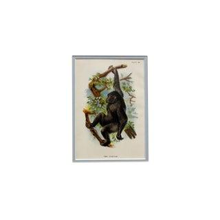 """The Gorilla"" Antique Chromolithograph"
