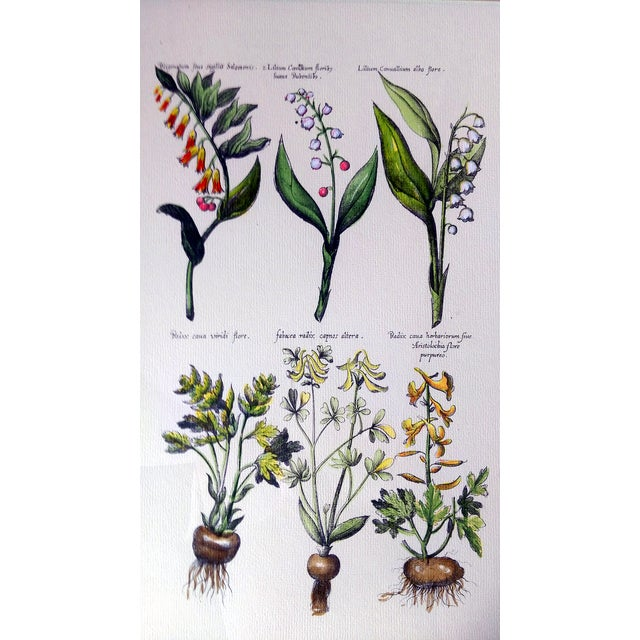 Botanical Print by Emanuel Sweert - Image 2 of 6