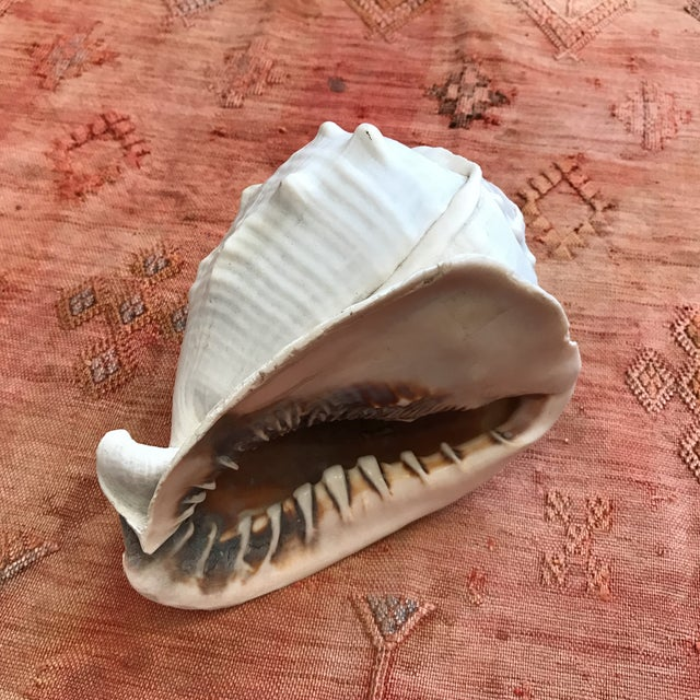 Queen Helmet Conch Seashell - Image 2 of 9