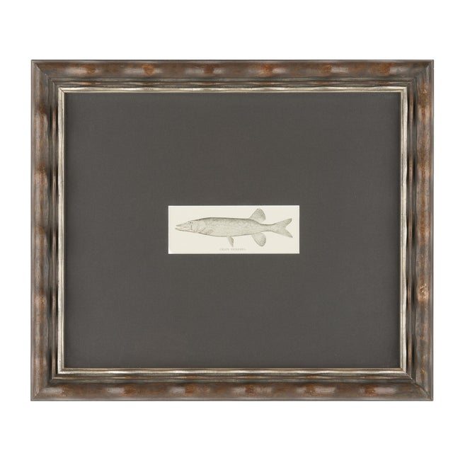 Image of Framed Fish Prints- A Pair
