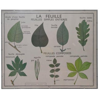 Plexiglass Framed French Botany Chart