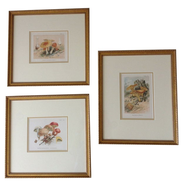 Vintage framed mushroom prints set of 3 chairish for Where to buy framed art