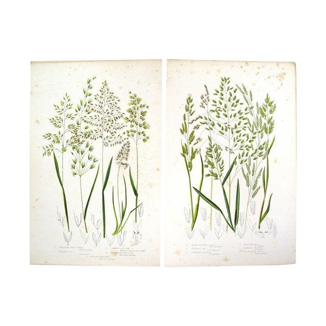 Antique 1860 Botanical Grasses Lithographs - A Pair - Image 1 of 4