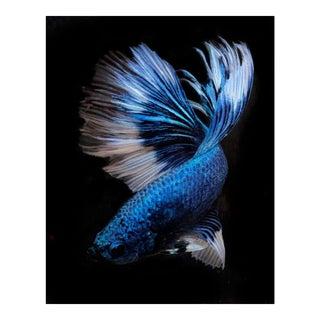 "Blue ""Beta 1"" Photograph"