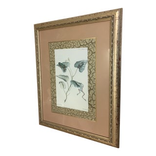 Edwin Wilson 1882 Tree Frog Framed Lithograph