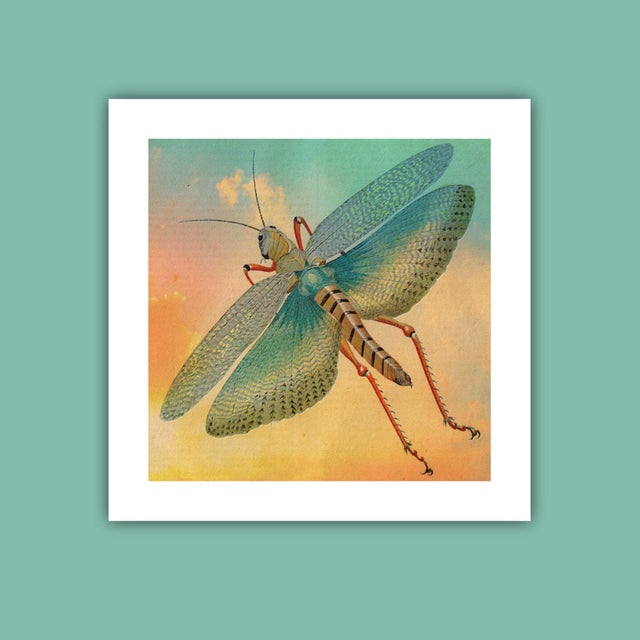 Antique 'Flying Grasshopper' Archival Print - Image 3 of 4