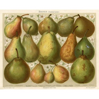 Late 1800s Pears Lithograph Print