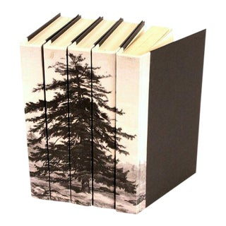 Image Collection Black & White Spruce Tree Books - Set of 5