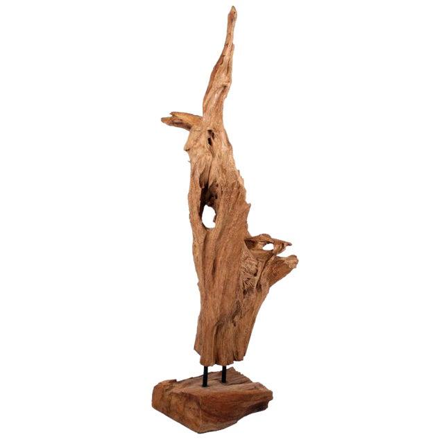 Image of Asian Wild Teak Tree Root Sculpture