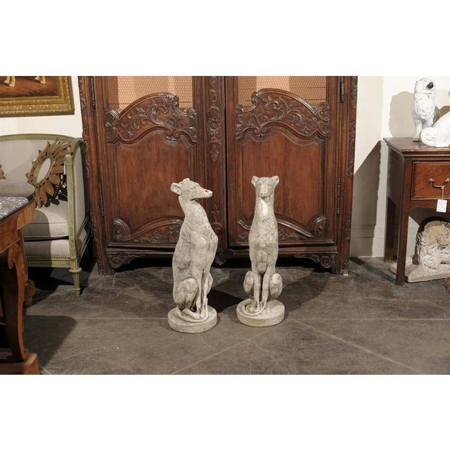 Pair of Vintage Carved Cement Greyhound Sculptures Sitting on Circular Bases - Image 3 of 9