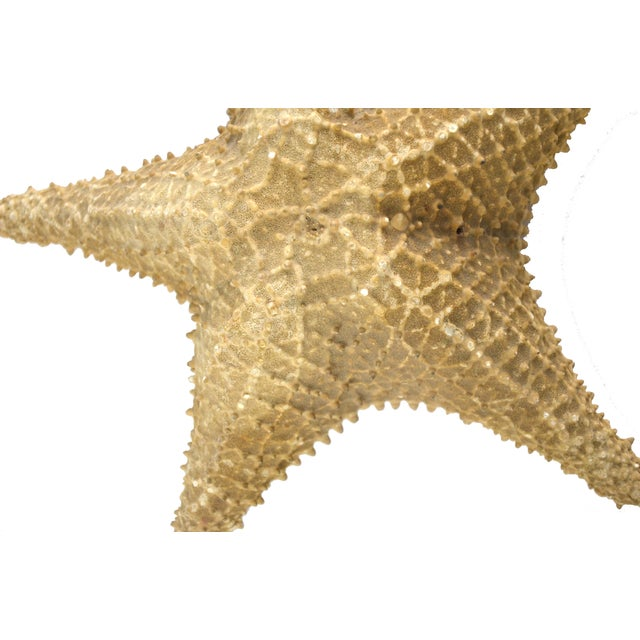 Vintage Nautical Starfish - Image 2 of 4