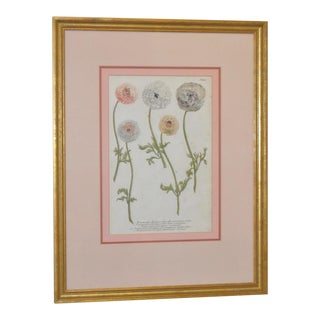 19th C. Hand Colored Botanical Etching