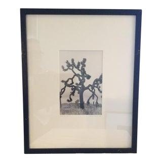 """Joshua Tree"" #91 Photograph, 1984"