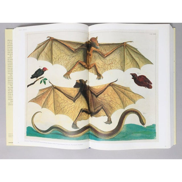 'Cabinet of Natural Curiosities' Oversized Coffee Table Book - Image 3 of 11