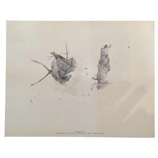 """Storing Up"" by Andrew Wyeth, Print"