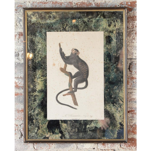 18th-C. Colored Monkey Print by Jean Baptiste - Image 2 of 10