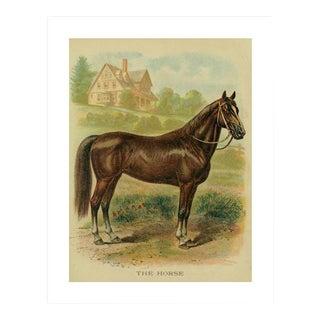 Vintage 'The Horse' Archival Print