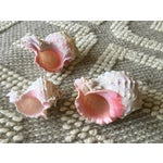 Image of Natural Pink Queen Conch Set/3 Nautical Decor