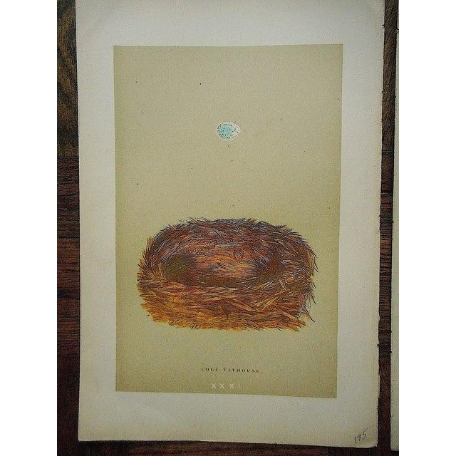 Antique Morris Nest & Egg Prints - Set of 4 - Image 5 of 6