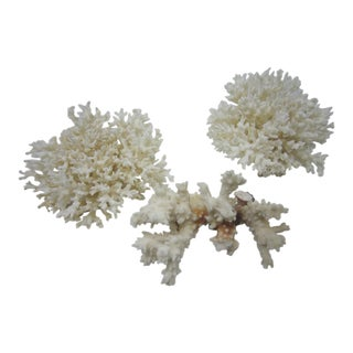 Branch Coral Specimens - Set of 3