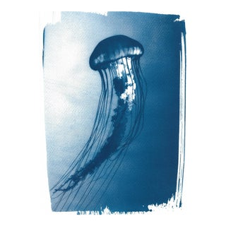 Limited Serie, Jellyfish Medusa Floating in the Ocean, Cyanotype , A4 size