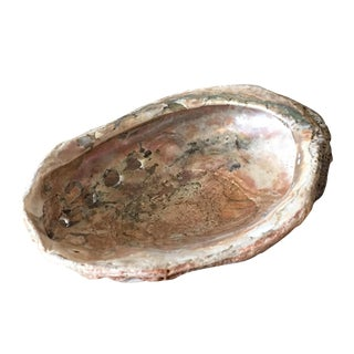 Natural Abalone Shell