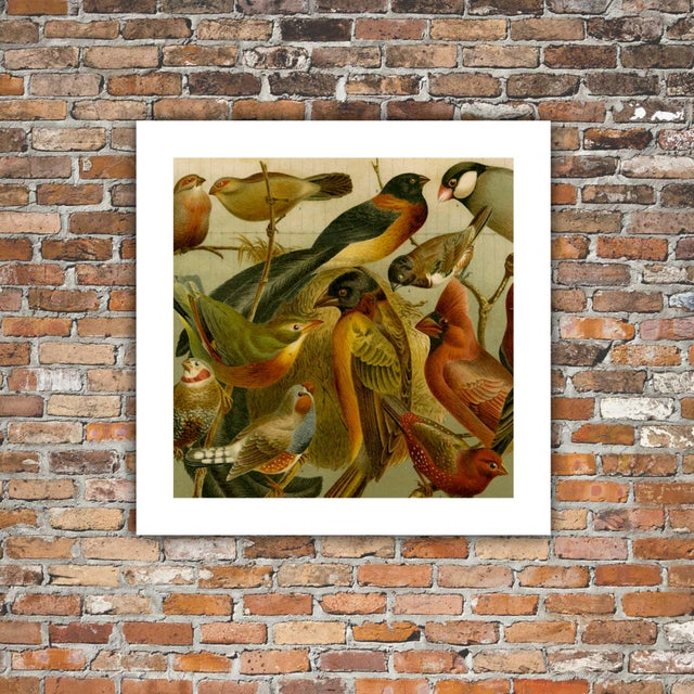 Image of Antique 'Red Birds' Archival Print