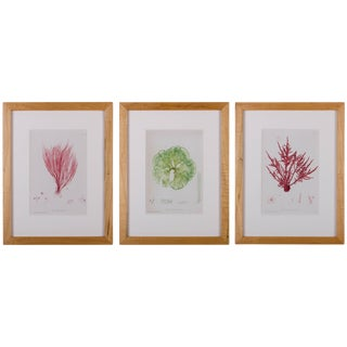 Bradbury Seaweed Prints in Hand-Crafted Frames - Set of 3