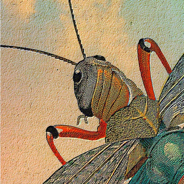 Image of Antique 'Flying Grasshopper' Archival Print
