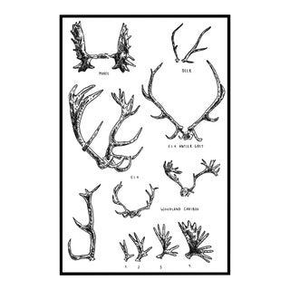 """""""Antler Diagram"""" Framed Drawing"""