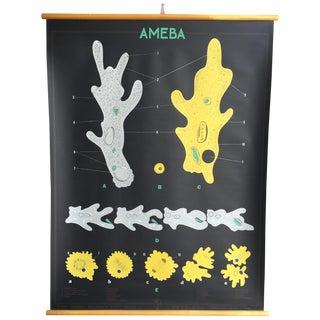 Vintage Black Canvas Biology Ameba Chart