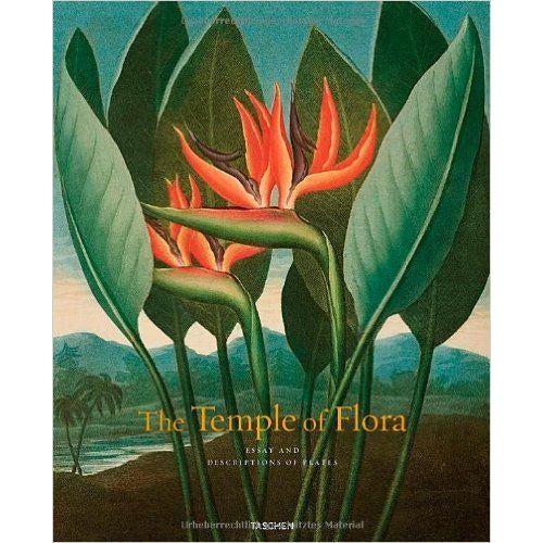 1812 Antique British Flora Pericorp Print - Image 3 of 3