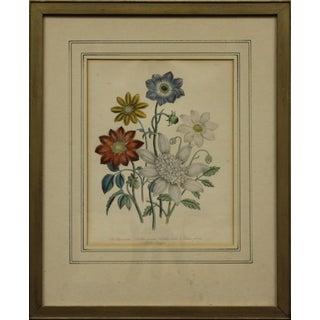 """19th C. """"Dahlias"""" Color Plate"""