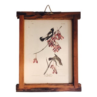 Vintage Framed Audubon Bird Print