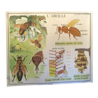 Vintage French Honey Bee School Poster