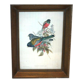 Framed Bird Lithograph Print
