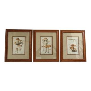 Framed French Mushroom Drawings - Set of 3