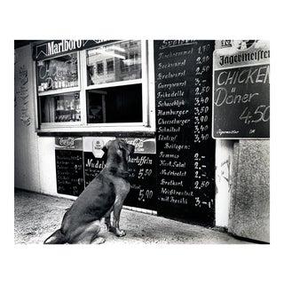 """The Dresden Dog"" Original Black & White Photograph"