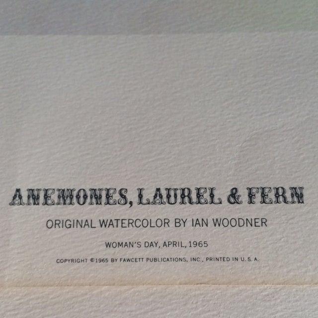 Art Print by Ian Woodner Anemones, Laurel & Fern - Image 6 of 8