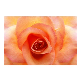 Fine Art Rose Photograph