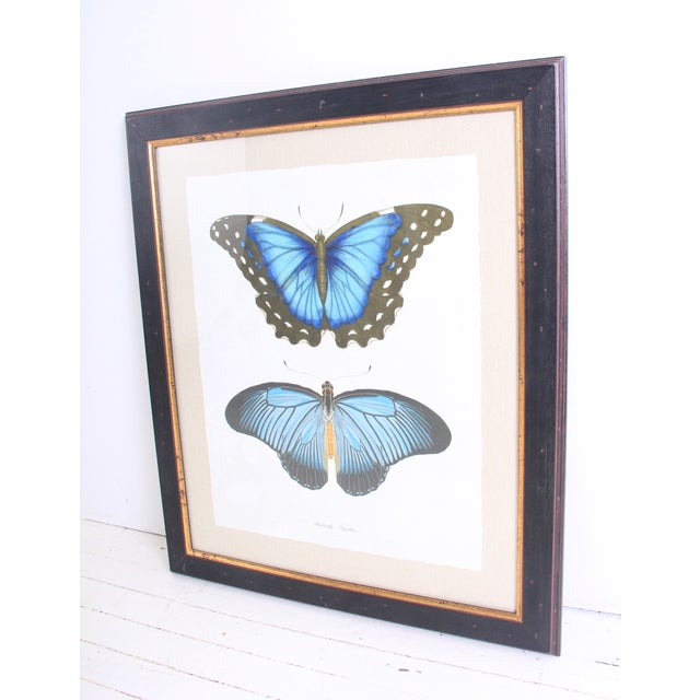 Image of Large Vintage Butterfly Print Framed
