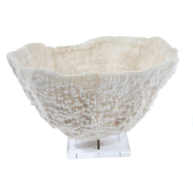 LARGE BOWL-SHAPED CORAL SPECIMEN ON STAND - Image 2 of 11