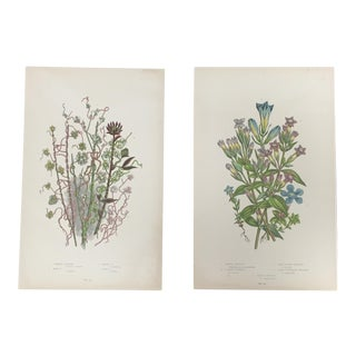 Vintage Botanical Prints - A Pair