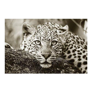 Black and White Acrylic of African Leopard