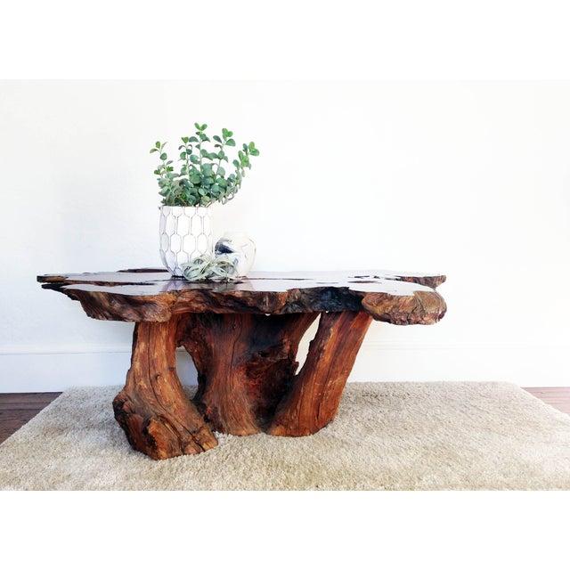 Vintage Live Edge Redwood Burl Coffee Table